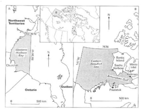 Map showing the western Hudson Bay region and the eastern Beaufort Sea, Canada. From Stirling and Lunn 1997:168.