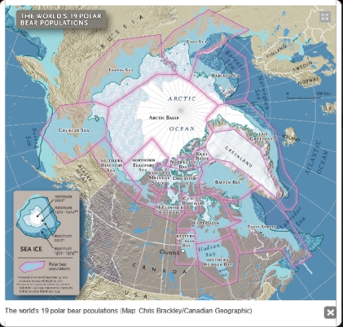 "Fig. 1. Map of the Arctic showing polar bear subpopulations and sea ice. Reproduced from Canadian Geographic, December issue, ""The truth about polar bears,"" by Zac Unger. Click to enlarge"