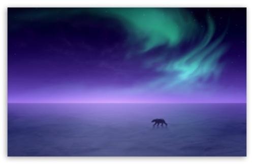 polar bear aurora_borealis_3-t2 free