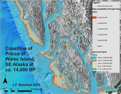 Figure 4. Map depicting how much potential refugia habitat for bears would have existed on Prince of Wales Island and southern Baranof Island at about 14,000 RCYBP, taking the forebulge effect and sea level change into account. Yellow dots mark the caves where pre- and post-glacial brown bear fossils were found. Orange marks potential kelp habitat that must have existed offshore at this time. Map by J. F. Baichtal, USFS. From Baichtal and Crockford (2011b).