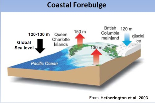 Figure 2. The coastal forebulge effect, as it affected Haida Gwaii (formerly the Queen Charlotte Islands) in northern British Columbia (see Fig. 1), down to northern Vancouver Island. While sea level declined about 120-130m during the LGM, glacial ice on the mainland uplifted the strait between the islands well as the islands themselves, creating a huge ice-free land mass that appears to have supported brown and black bears. From Hetherington et al. 2003.