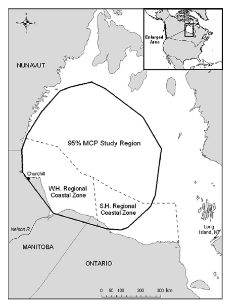 "Figure 1. This is figure 1 from Cherry et al. (2013, in press). The authors said they used ""daily sea ice concentrations approximated from daily Special Sensor Microwave/Imager (SSM/I) passive microwave data obtained from the National Snow and Ice Data Center (Boulder, Colorado). Sea ice concentrations were analysed at a resolution of 25 × 25 km cells. Daily sea ice concentrations were determined using the mean concentration value from all pixels within analysis-specific regions of interest. …Ice concentrations for these analyses were derived from an area within a 95% minimum convex polygon (MCP) determined from on-ice polar bear locations collected throughout the entire study (Fig. 1)."" No wonder only polar bear biologists do it."