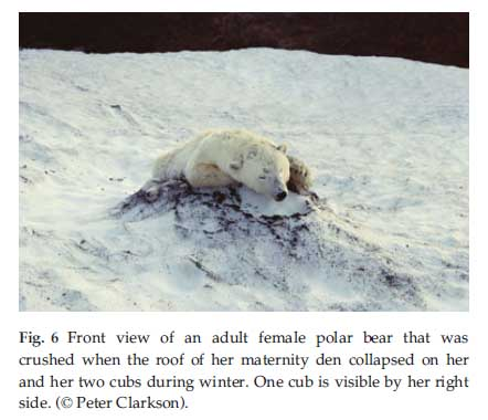 Caption: From Stirling and Derocher (2012:2700), presented as evidence that a bear died.