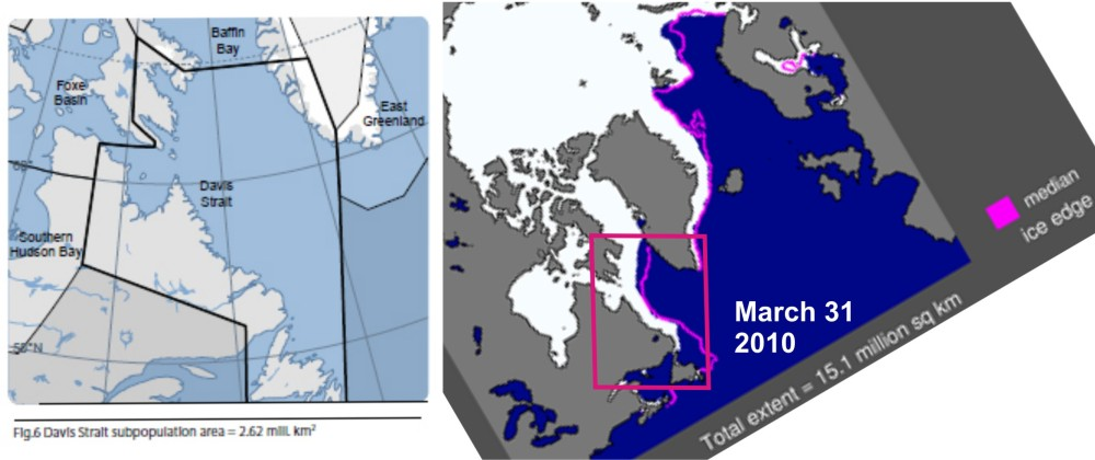 Signs that Davis Strait polar bears are at carrying capacity