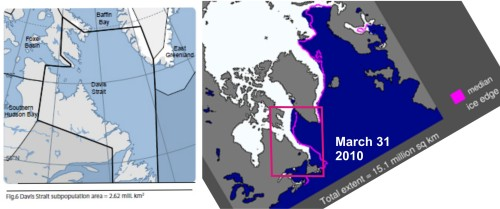 "Figure 1. The Davis Strait subpopulation region runs from just below the Arctic Circle at the north end to at least 470N in the south (map on the left from Vongraven and Peacock 2011: Figure 6). In total area, it covers 2.62 million km2 but much of that area is land or open water, even in late spring. The actual ""suitable ice habitat in spring"" (determined by Taylor and Lee 1995) is only 420,100 km2, which is about 16% of the total area. This seems a reasonable average: the map on the right shows the sea ice extent at the end of March 2010 (NSIDC)."