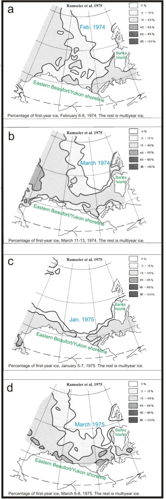 Figure 6. Ice thickness maps from Ramseier et al. 1975. The multiyear ice (white areas) seem to have impacted the west coast of Banks Island severely in the springs of both 1974 and 1975, while the coast of the Eastern Beaufort/Yukon mainland in the south may have been more severely impacted in 1975. Most of the sampling of polar bears in the 1970s occurred around Banks Island, with some along the Eastern Beaufort/Yukon coastline.