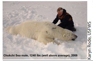 Global population of polar bears has increased by 2,650-5,700 since 2001 (2/2)