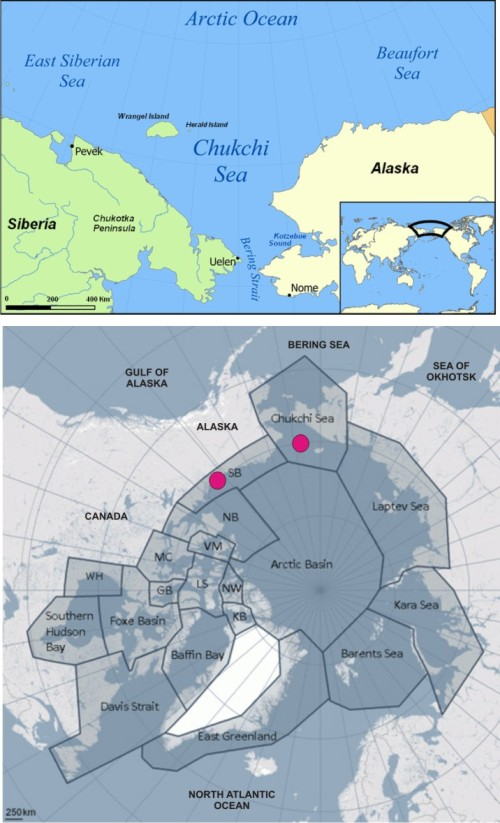 Figure 1. Chukchi and Beaufort Seas (from Wikipedia), upper. 'Chukchi Sea' polar bears are shared between the USA and Russia; 'Southern Beaufort' bears are shared between the US and Canada, lower (from PBSG, with labels added). Pink dots are the subpopulations featured in the Rode et al. presentation and upcoming paper.