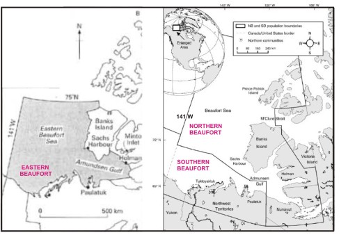 """Figure 1. Re-jigging of polar bear subpopulations now splits what used to be an entirely Canadian segment, called the """"Eastern Beaufort"""" (map on the left, from Stirling and Lunn 1997), into """"Southern Beaufort"""" (shared with the USA) and """"Northern Beaufort,"""" with the Canada-USA border at 141 W (map on the right, from Stirling et al. 2011). Labels added for clarity. Most of the polar bears sampled for the Stirling et al. paper were captured along the west and south coasts of Banks Island, although a few were captured north of Banks Island in M'Clure Strait and in Amundsen Gulf to the southeast."""