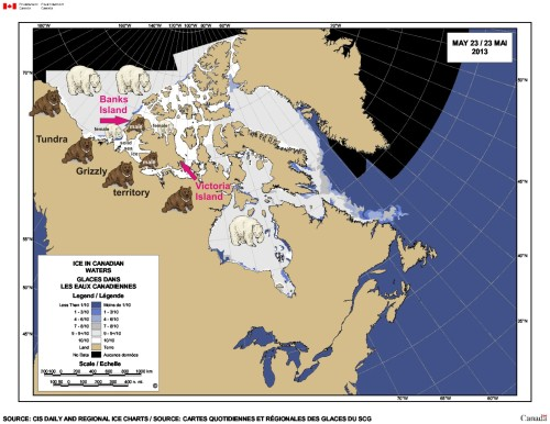 Figure 1. Sea ice extent in late spring in the western Arctic (May 23, 2013). Note that there is solid ice between the mainland and Banks and Victoria islands at this time. Some grizzly males emerge from their winter dens long before grizzly females and go wandering in search of food and potential mates: they can find both out on the sea ice beyond the coastline. See Fig. 2 for a history of grizzly excursions onto the sea ice and the Arctic islands, which have taken then even further north than Victoria Island. Click to enlarge.