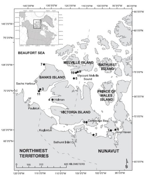 polar bear report essay