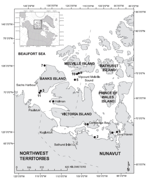 "Figure 2. This map is Fig. 1 from the Doupé et al. (2007) paper. It shows the locations of ""selected examples of grizzly bear sightings in the southern Canadian Arctic Archipelago,"" up to and including the hybrid shot in 2006. 1. Schwatka (1995 interprets the ""unusual animals"" sighted by Inuit in the Simpson Strait area as grizzly bears; 2) 1938: pair of grizzlies observed on the sea ice 24 m west of Perry River; 3)1951: hunter kills grizzly bear in Masik River valley, Banks Island; 4) 1986: one bear shot, another suspected in Holman; 5) 1991: bear tranquillized and examined on sea ice, 60 km south of Melville Island; 6) 1996-2002: five kill records in Gjoa Haven; 7) five-year-old male grizzly harvested around Gore Islands; 8) 2001:bear denned within 20 km of Cambridge Bay; 9) 2003: most northerly sighting of a grizzly bear in Canada, Cape Clarendon (this study); 10) 2004: tracks observed , DNA obtained, Cape Providence (this study); 11) 2006: grizzly-polar bear hybrid killed, Nelson Head. The paper is available free of charge (here)."