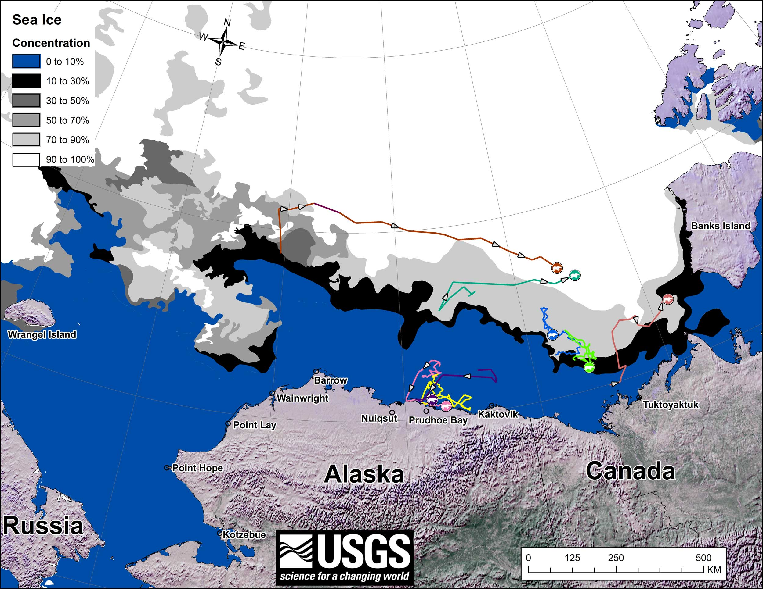 Polar Bears At Kaktovik Alaska Not Stranded Due To Retreating Ice - Map of where polar bears live