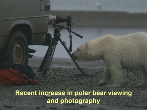 "Figure 1. From T. DeBruyn, 2011. Slide 1 from ""Activities in polar areas – tourism."" Presentation to the 2011 Polar Bear Meeting in Nunavut, USA contingent. Oct 24-26, 2011."