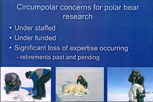 "Figure 2. The sad state of polar bear research. From Derocher and Stirling 2011. Slide from ""Conservation status, monitoring, and information gaps."" Invited speaker presentation to the 2011 Polar Bear Meeting in Nunavut, USA contingent. Oct 24-26, 2011."