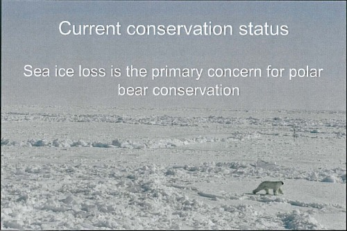"Figure 7. According to polar bear biologists, global warming has replaced oil and gas exploration as the newest perceived threat to polar bears. From Derocher and Stirling 2011. Slide from ""Conservation status, monitoring, and information gaps."" Invited speaker presentation to the 2011 Polar Bear Meeting in Nunavut, USA contingent. Oct 24-26, 2011."