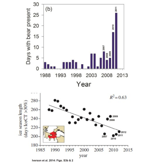 "Figure 4. Two graphs from Iverson et al. 2014. Top (their supplemental Fig. S3b): ""the number of days on which one or more polar bears was sighted at the Cape Pembroke thick-billed murre colony,"" 1988-2011. That could be the same bear sighted every day over that period or several sighted on multiple days. Bottom (their Fig. 2): ""decline in annual sea ice coverage in Northern Hudson Bay Narrows"" for 1988-2012 (days with >30% ice). While there is a trend in both datasets, note the lack of a consistent correlation between length of ice season (bottom) and polar bear presence (top) year-to-year, especially for 2007 vs 2011. The real increase in bear sightings was confined to 2010 and 2011 – two years out of 20."