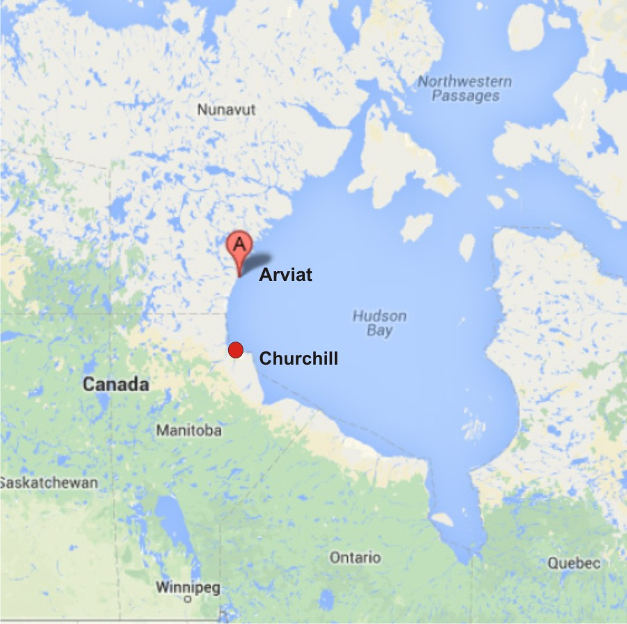 Churchill Alaska Map.Guest Post Invasive Research Is Alive And Well In Canada