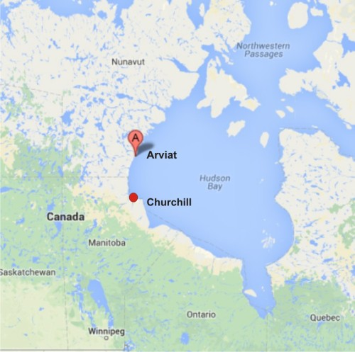 Churchill is in the Western Hudson Bay polar bear subpopulation, governed by the Province of Manitoba, while the community of Arviat, also in 'Western Hudson Bay' is overseen by the Government of Nunavut.