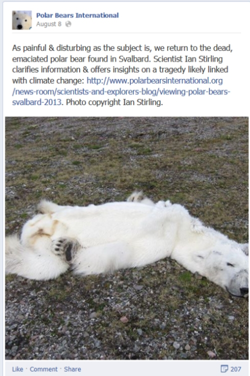 PBI link to Stirlings blog post on the bear that died of climate change_with activist spin_Aug 8 2013