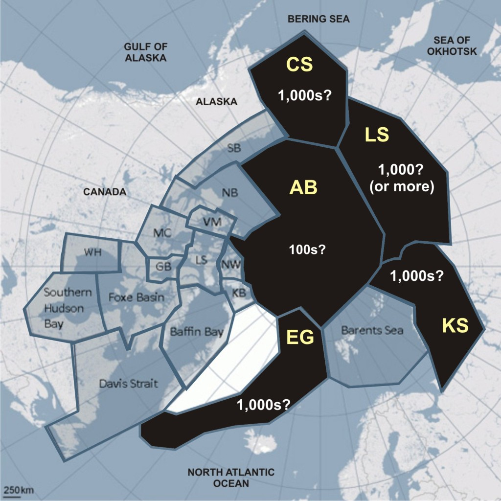 """Figure 1. Based on previous PBSG estimates and other research, there are probably another 6,000-9,000 (perhaps less but perhaps more) bears living in the regions marked in black above, although suitably """"scientific"""" population surveys have not been done. These bears are not included in the most recent PBSG """"global population estimate"""" – a 'rough guess,' such as suggested here, has been deemed of no use to the PBSG, so their population estimate is """"zero.""""  CS, Chukchi Sea; LS, Laptev Sea; KS, Kara Sea; EG, East Greenland; AB, Arctic Basin."""