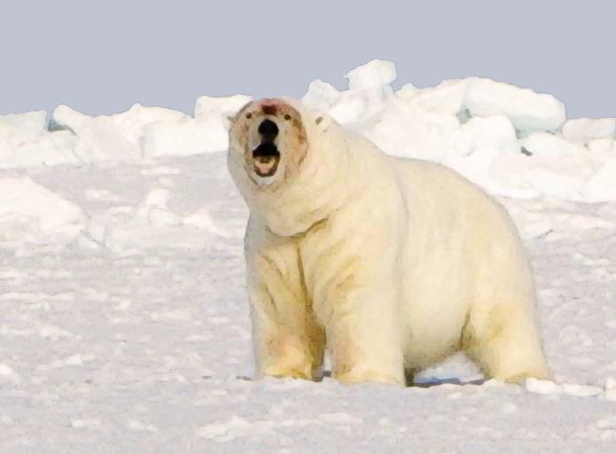 Porn polar