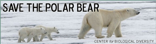 Figure 1. Are polar bears really endangered? The US Fish and Wildlife Service thinks so, but only because Steven Amstrup, based on a computer model projecting sea ice out to 2050, said so (Amstrup et al. 2007). This information has been used by the Center for Biological Diversity and other NGOs, like WWF and Polar Bears International (where Amstrup is now employed), to solicit donations.