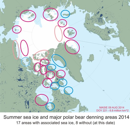 Figure 1. Ice extent at August 8, 2014 in relation to major known polar bear denning areas around the Arctic (Obbard et al. 2010). Only 47% of all such den habitat is without associated sea ice at this time. Note the most pregnant females in the Southern Beaufort region (Alaska) are known to den on the sea ice rather than on land, as do a fairly high proportion of Barents Sea bears. Major areas in dark magenta/blue, minor areas in pale pink/light blue. Map courtesy MASIE.
