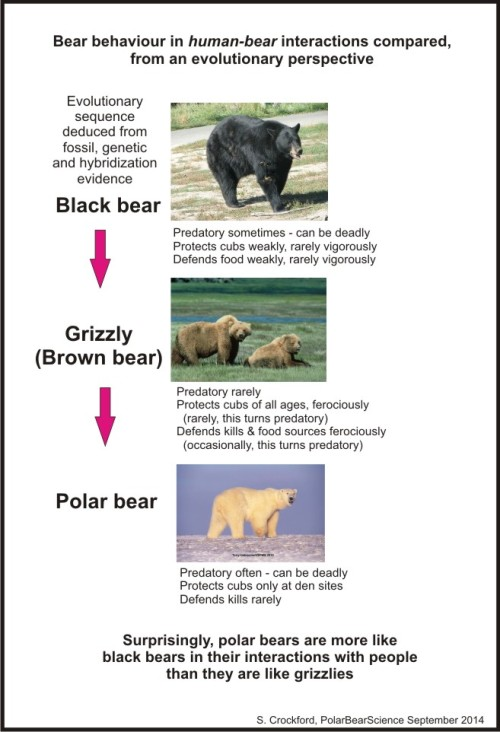 Figure 3. My summary of the behaviour of bears as it relates to interactions with humans and attacks on people.