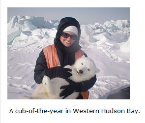 Derocher's recently graduated Master's student Alysa McCall has a photo op with a WHB cub (from her student page).