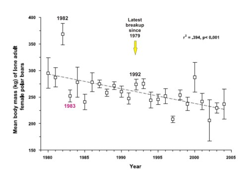 "Figure 2. From Stirling and Parkinson (2006), original caption: ""Mean estimated mass of lone (and thus possibly pregnant) adult female polar bears in Western Hudson Bay from 1980 through 2004 (dashed line indicates fit of linear regression)."" Highest weights were in 1982, lowest in 2002. The actual number of bears measured each year, or the total number, was not stated. Some additional labels are mine."