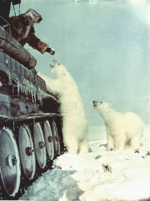 Soviet soldier in a tank, feeding condensed milk to polar bears c. 1950 - Imgur