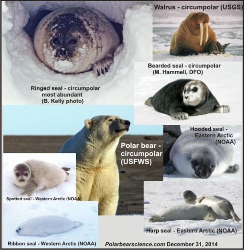Arctic marine mammals_Dec 31 2014_Polarbearscience