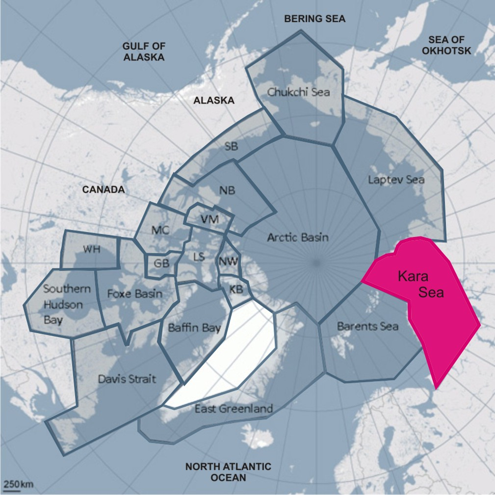 Kara Sea: first-ever polar bear count suggests about 3,200 bears ...