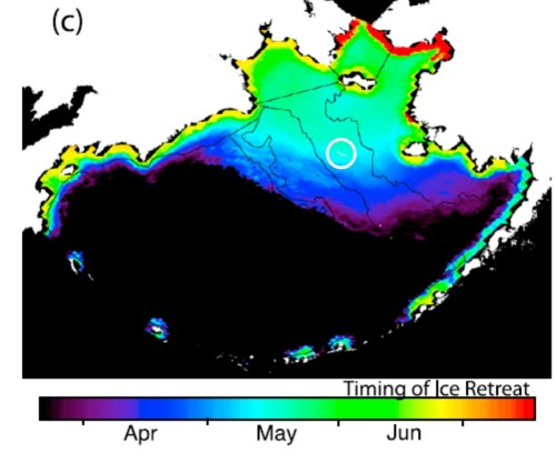 Figure 3. Mean timing of sea ice retreat for 1979-2009, from Brown et al. 2011, which also shows the mean maximum spring sea ice extent beyond St. Matthew Island (circled, added by me).