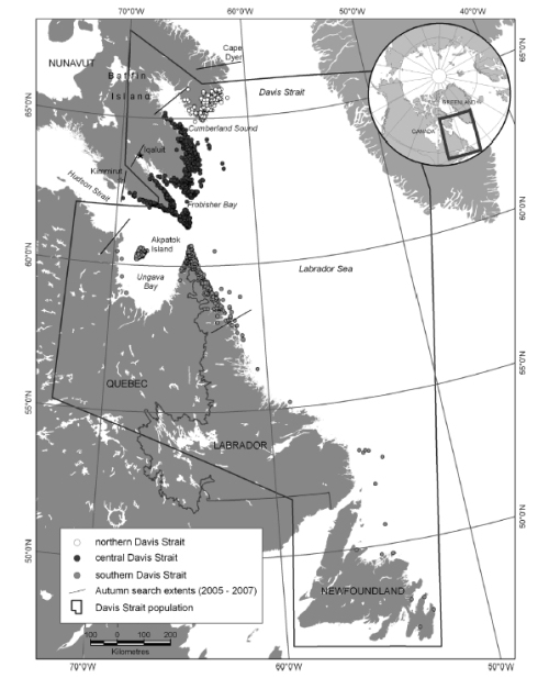 Figure 5. This is Fig. 1 from Peacock et al. 2013, a compilation of survey data of polar bears in Davis Strait from 1974-2007.