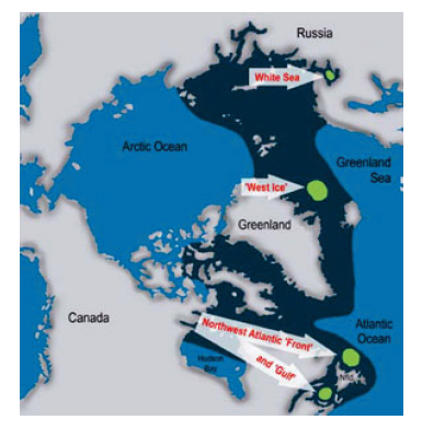 "Figure 4. Fig. 1. from Stenson 2014, on the conclusions of the working group on harp and hooded seal status. Green spots are pupping and moulting areas, dark blue is the total distribution area. The ""West Ice"" off East Greenland is used by both species."