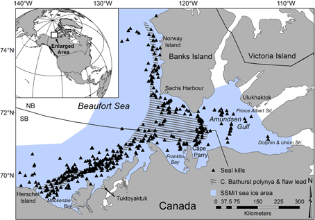 "Figure 1. Area of the Pilfold et al. (2015) study in the eastern Beaufort, Canada, Fig 1 in the paper. The region encompassed part of the ""Southern Beaufort"" and the ""North Beaufort"" polar bear subpopulations."