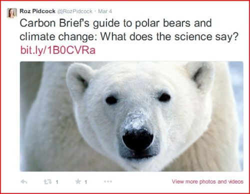 Pidcock tweet on polar bears at 5 March 2015 6_20PM Pacific