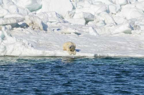 Chukchi June 15 2014_USGS_Brian Battaile_after swim_sm