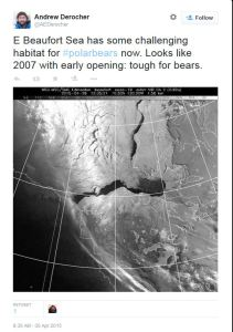 Figure 6. Tweet from polar bear biologist Andrew Derocher, 30 April 2015