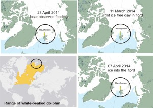 Figure   . Range of white-beaked dolphin compared to sea ice on the date Raudfjorden was ice-free on 11 March and when it became ice covered on 7 April, according to NSIDC MASIE charts. Trapped dolphins were about 6 weeks earlier than usual. Click to enlarge.