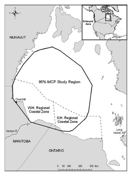 Figure 8. Defining breakup for WHB polar bears when sea ice coverage reaches 30% over western Hudson Bay, from Cherry et al. 2013. Click to enlarge.