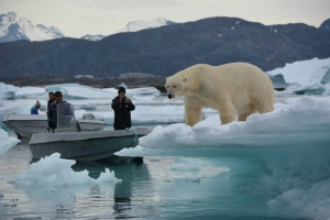 Greenland South_polar-bear-nanortalik-08_henrik-hansen_June_18_2015