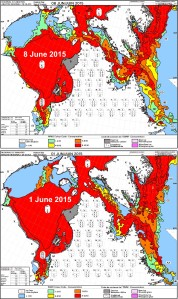 Hudson Bay breakup 8 June 2015 vs 1 June_PolarBearScience