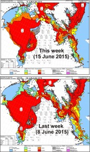 Figure 2c. Hudson Bay sea ice concentration for the week of 15 June (top) vs. 8 June (bottom). CIS. Click to enlarge.