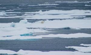 PolarBearCV1_USGS_2009