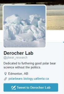 Derocher lab twitter page