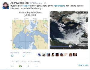 Derocher tweet 2015 July 20 tracking update WHB