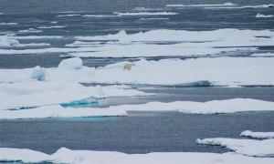 PolarBearCV1LG_USGS